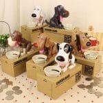 dog save box2